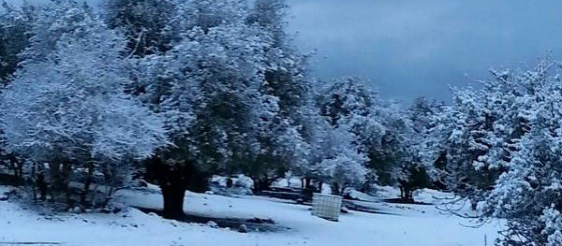 שלג בצפון ובגולן   קרדיט צילום: דר